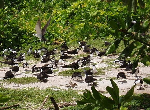 The Chagos Litigation: A Socio-Legal Dialogue