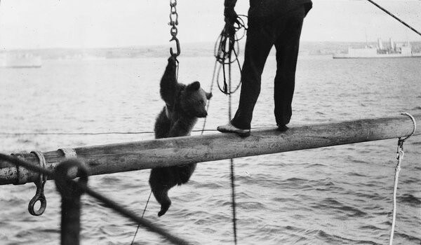 Maritime Animals: Telling Stories of Animals at Sea